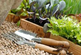 Высадка овощных культур