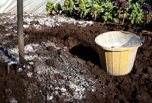 Подготовка почвы для вишни