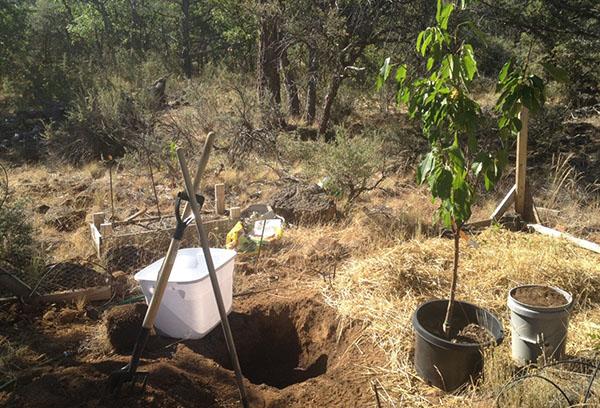 Подготовка к посадке вишни