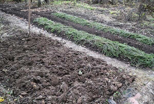 Подготовка места под посадку лука