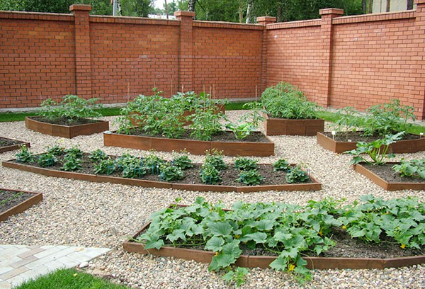 Декоративный огород на даче