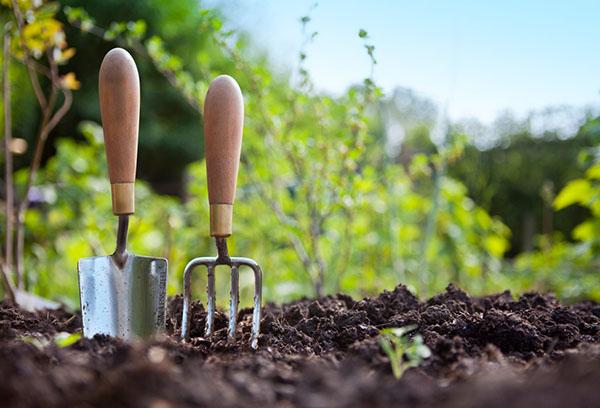 Подготовка почвы для щавеля