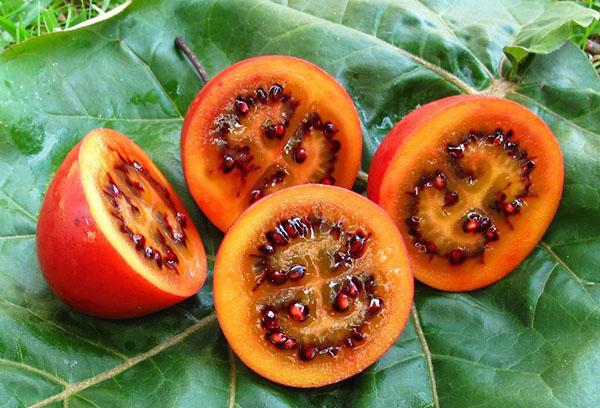 Плоды томатного дерева в разрезе