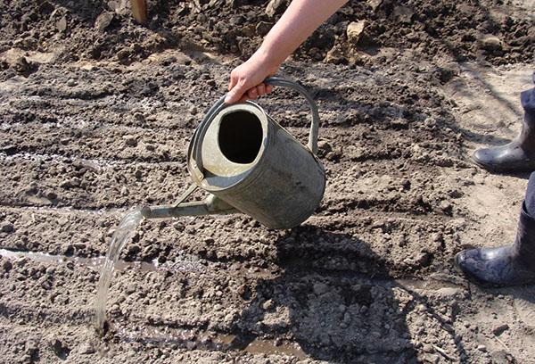 Подготовка участка для посадки редиса