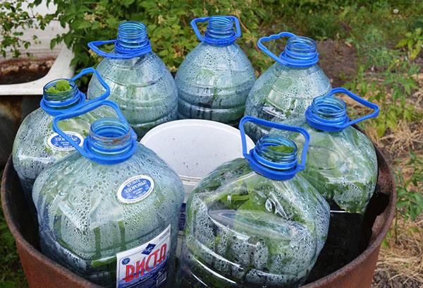 Огурцы в тепличках из 5-литровых бутылок