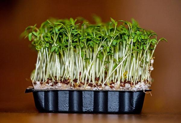 Кресс-салат в пластиковом лотке