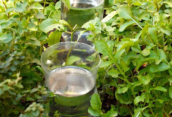 Полив растений из пластиковых бутылок