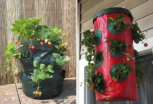 Выращивание клубники в мешках на балконе