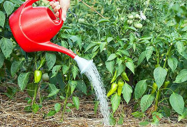 Когда лучше поливать огород утром или вечером