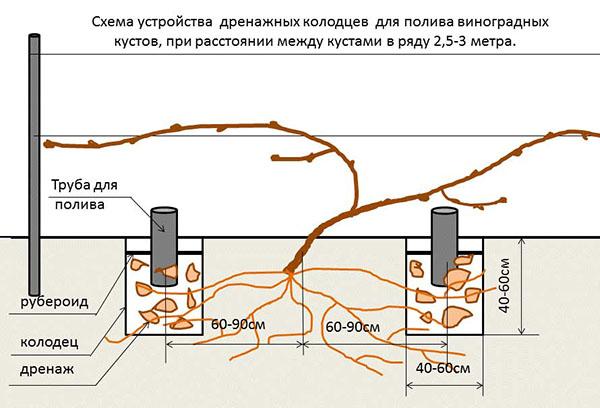 Схема полива винограда через трубы