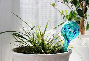 Колба для капельного полива комнатных растений