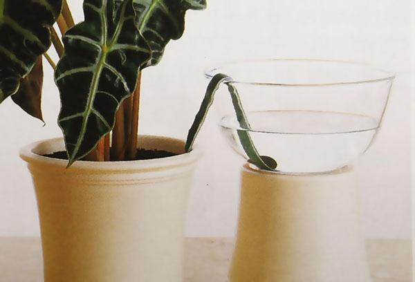 Фитильный полив растения
