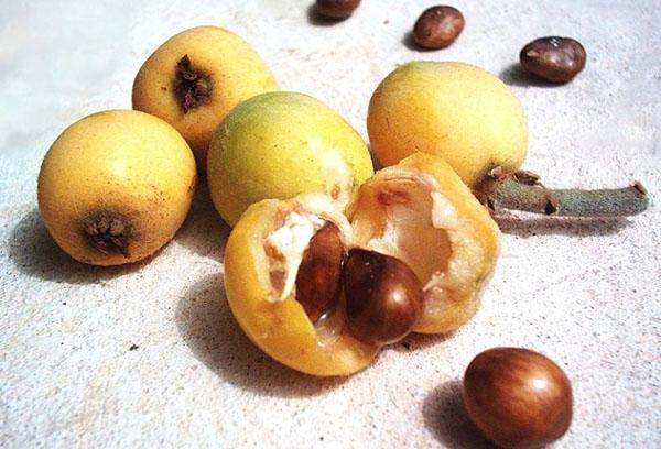 Семена мушмулы