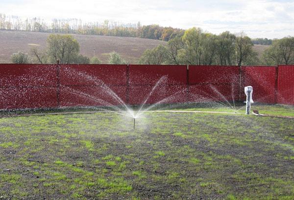 Дождевание газона после посадки семян