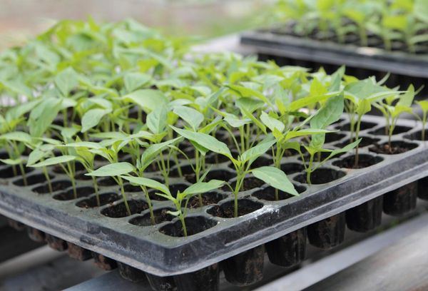 Пластиковый ящик для растений