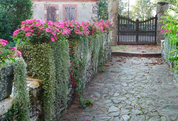 Цветы на участке