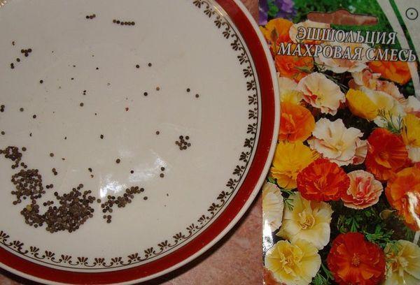 сухие семена цветка