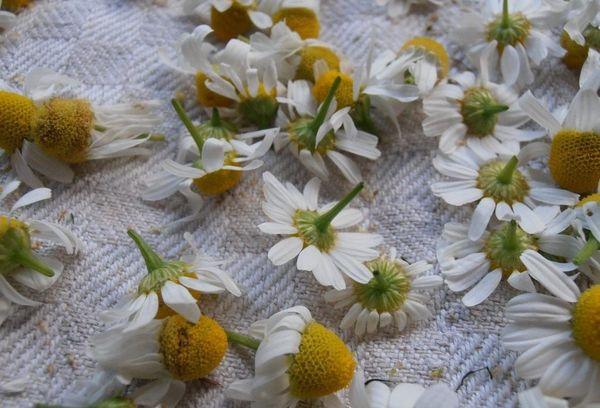 Высушивание цветков