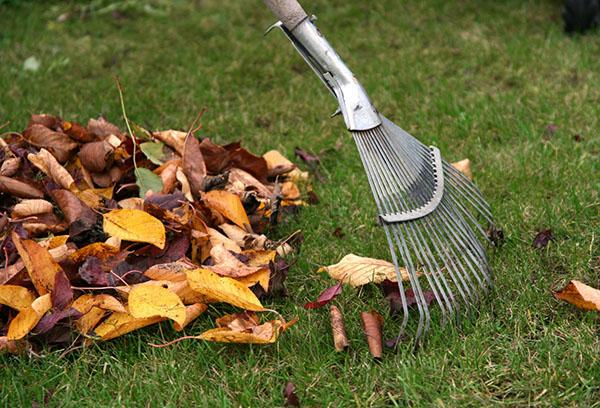 Уборка участка осенью