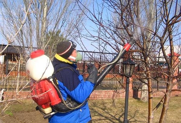 Опрыскивание сада весной