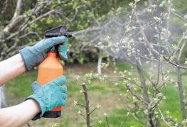 Опрыскивание плодовых деревьев