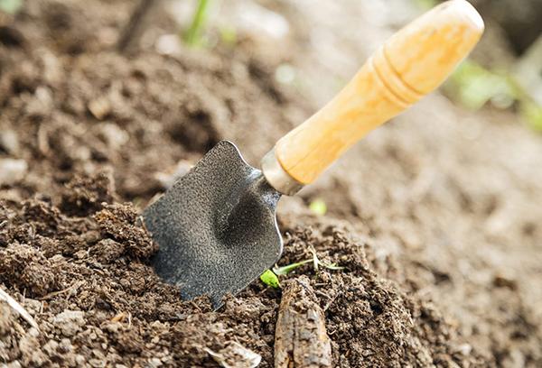 Совок в садовом грунте