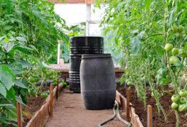 Бочки для полива помидоров