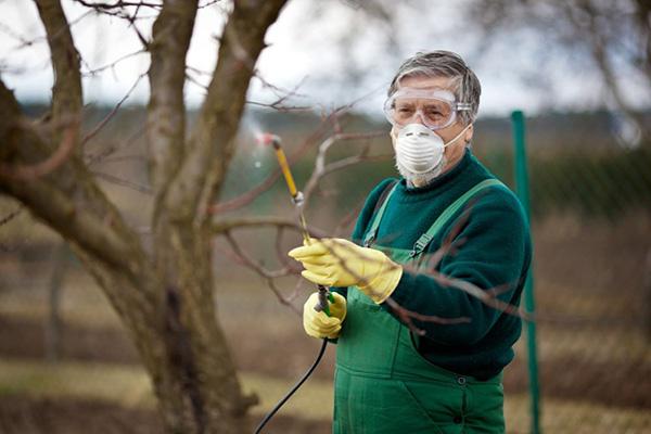 Мужчина опрыскивает яблоню