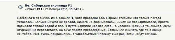 Отзыв об огурцах Сибирская гирлянда
