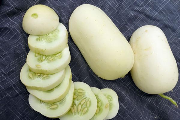 Белый мини-огурец для соленья (White Pickle Mini)