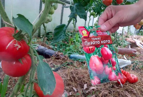 Семена помидора в пачке