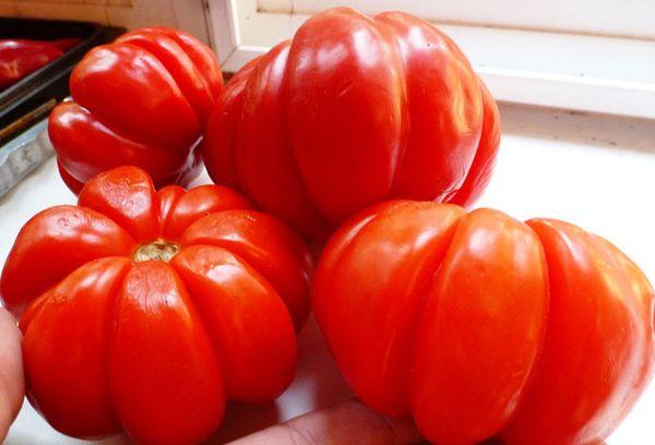 Крупный сорт помидора
