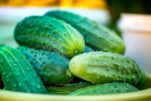 Плоды огурцов сорта Родничок