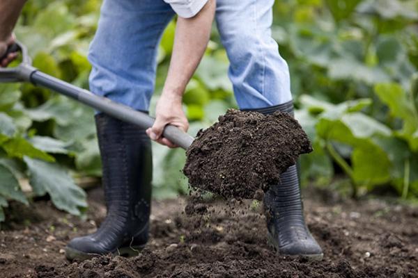 Обогащение огородного грунта