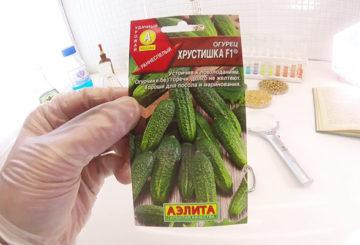 Семена огурца Хрустишка F1