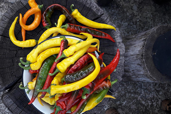 Урожай перца Бараний рог