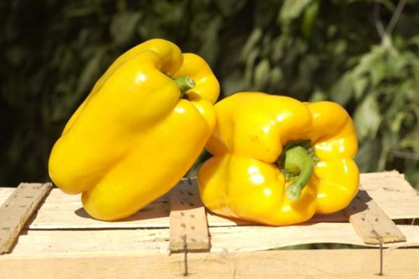 Плоды перца Белое золото