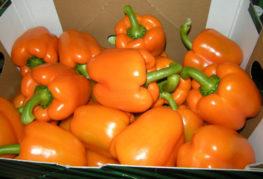 Урожай перца Оранжевое чудо