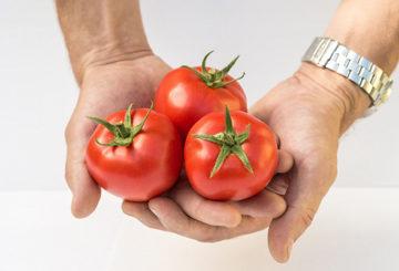 Плоды томатов сорта Любаша