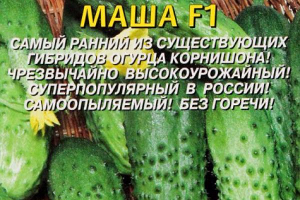 Описание огурцов Маша F1
