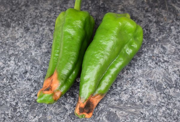 Гнилые перцы