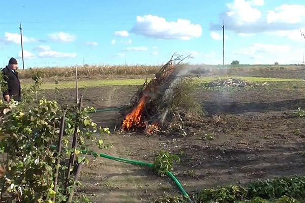 Сжигание растительных остатков на огороде