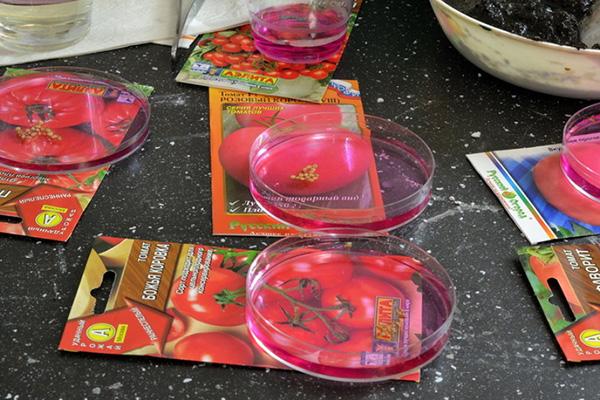 Обработка семян томата перед посадкой
