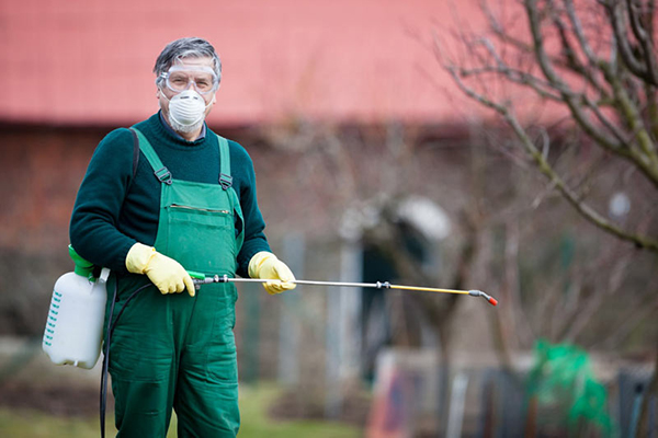 Мужчина в респираторе и перчатках опрыскивает дерево