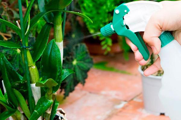 Опрыскивание декоративного растения