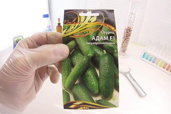 Семена огурцов Адам F1