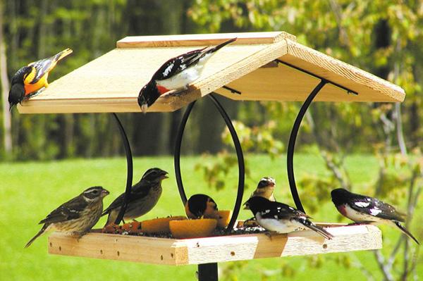 Кормушка для птиц в саду