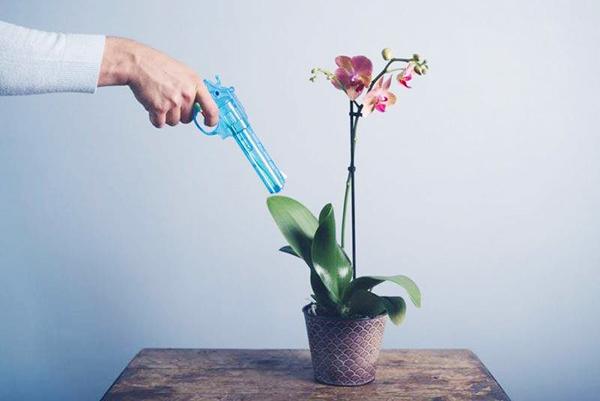 Борьба с инфекциями орхидеи