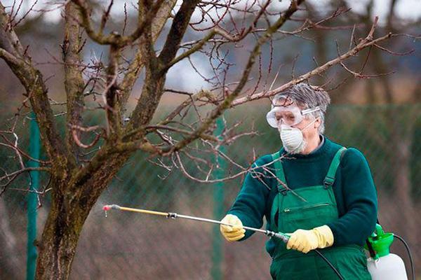 Мужчина в средствах индивидуальной защиты опрыскивает дерево