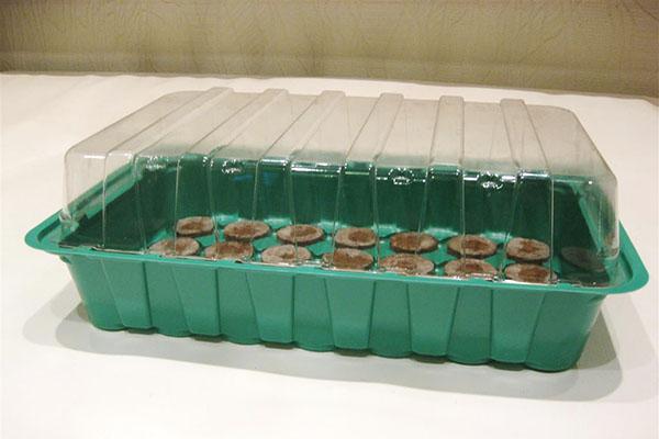 Торфяные таблетки в контейнере с крышкой